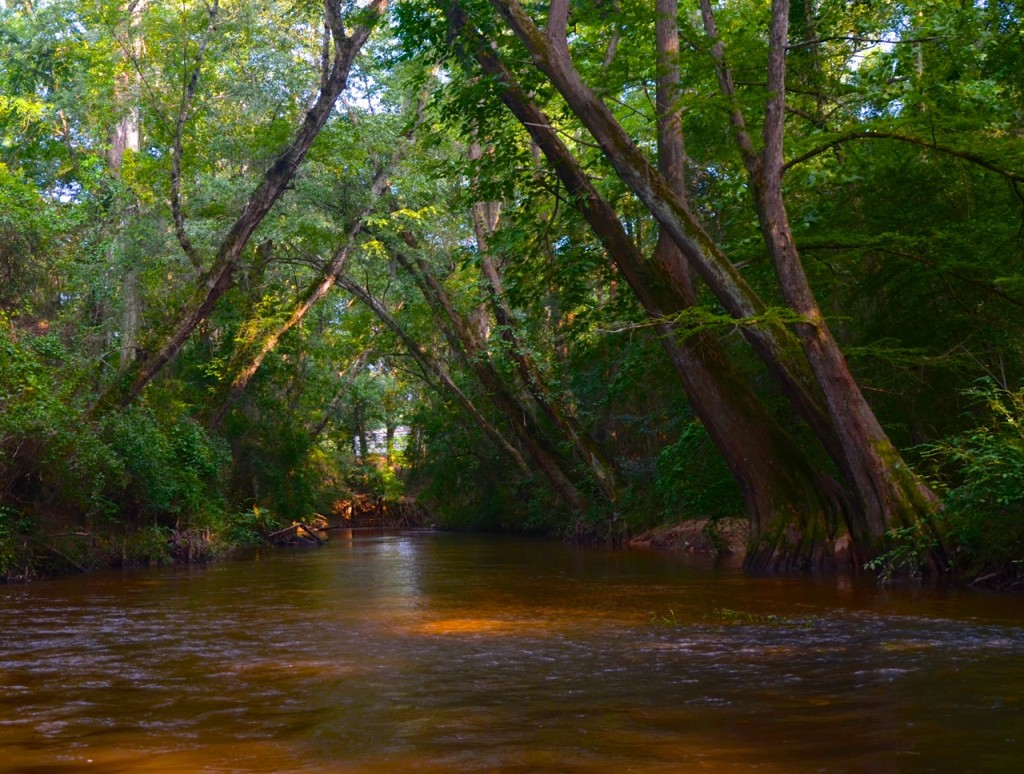 Autauga_Creek8-2-13f