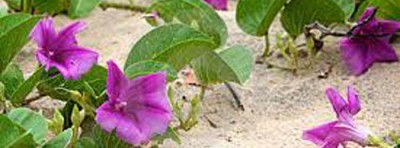 Mix wet sand in container and place flowers in it