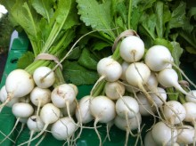 Those Beautiful Turnips – Are They Animal Food?
