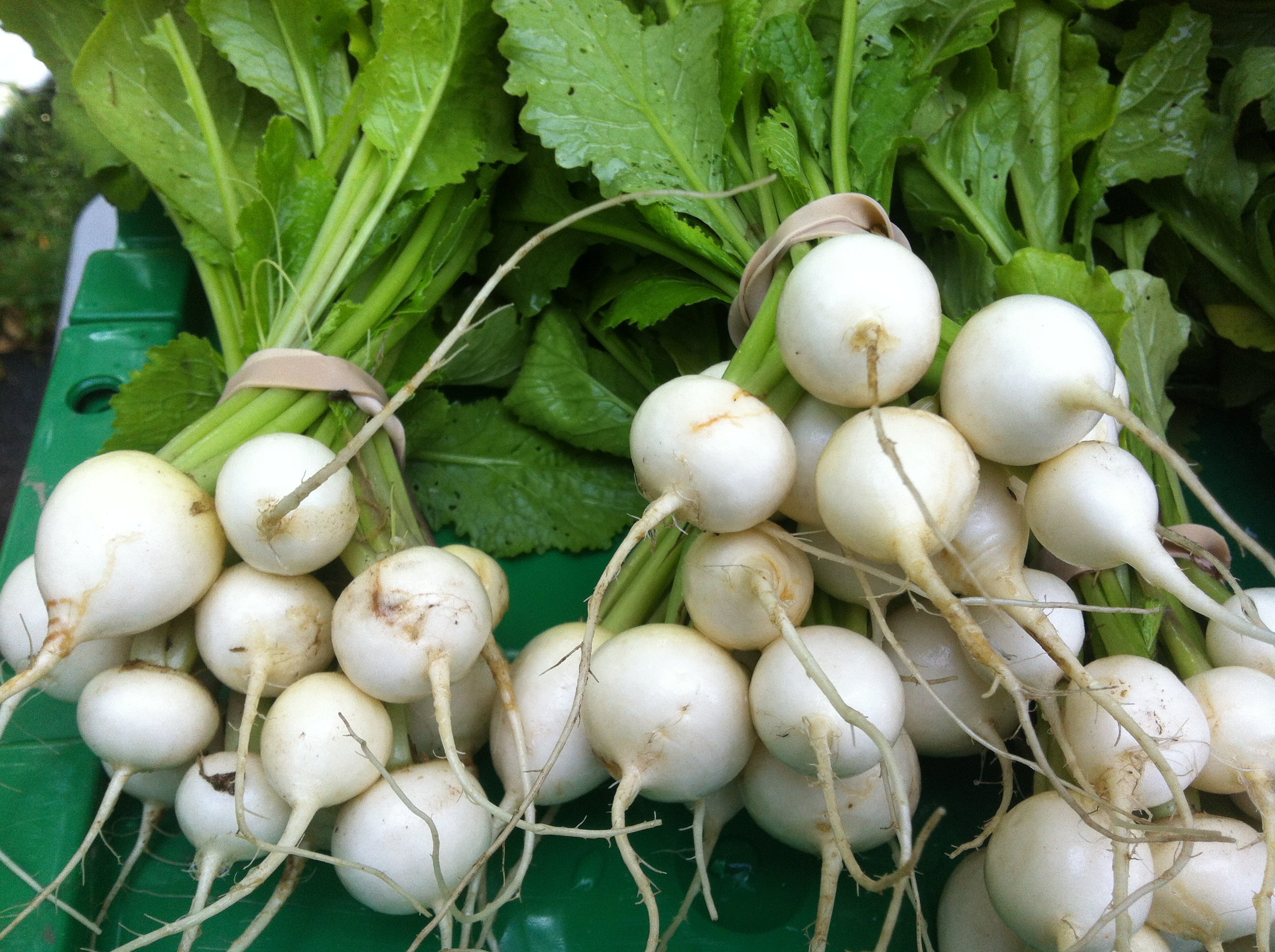 Those Beautiful Turnips - Are They Animal Food?