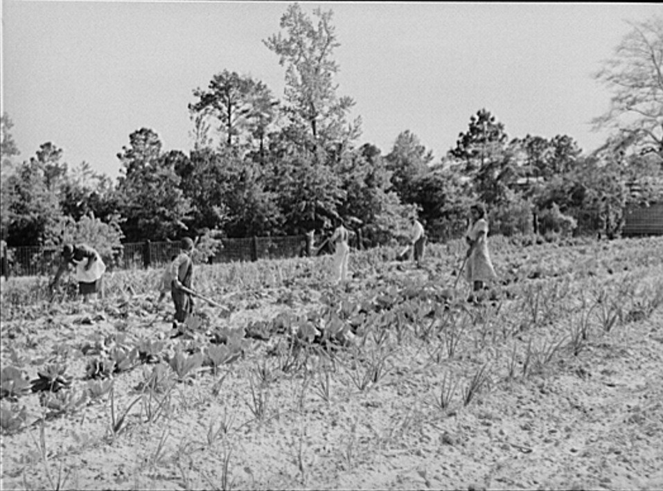 1939 Mark and Angelina Parker and their family working in their home garden. Gee's Bend, Alabama