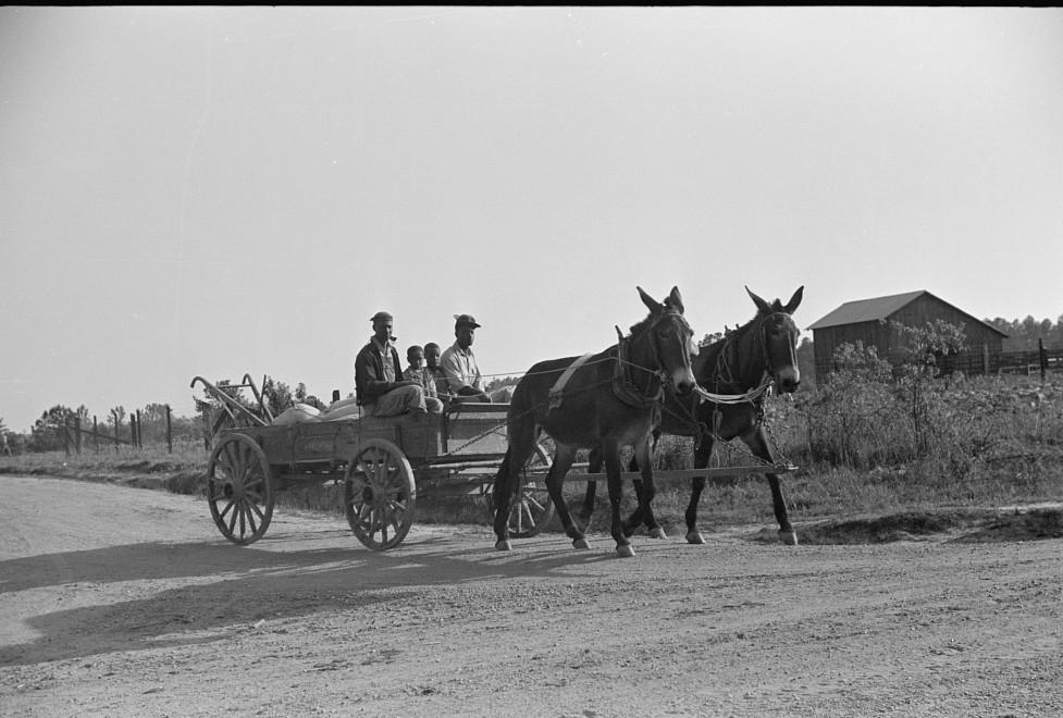 1939 Nolan Pettway's children bringing home wagonload of fertilizer, Gees Bend, Alabama