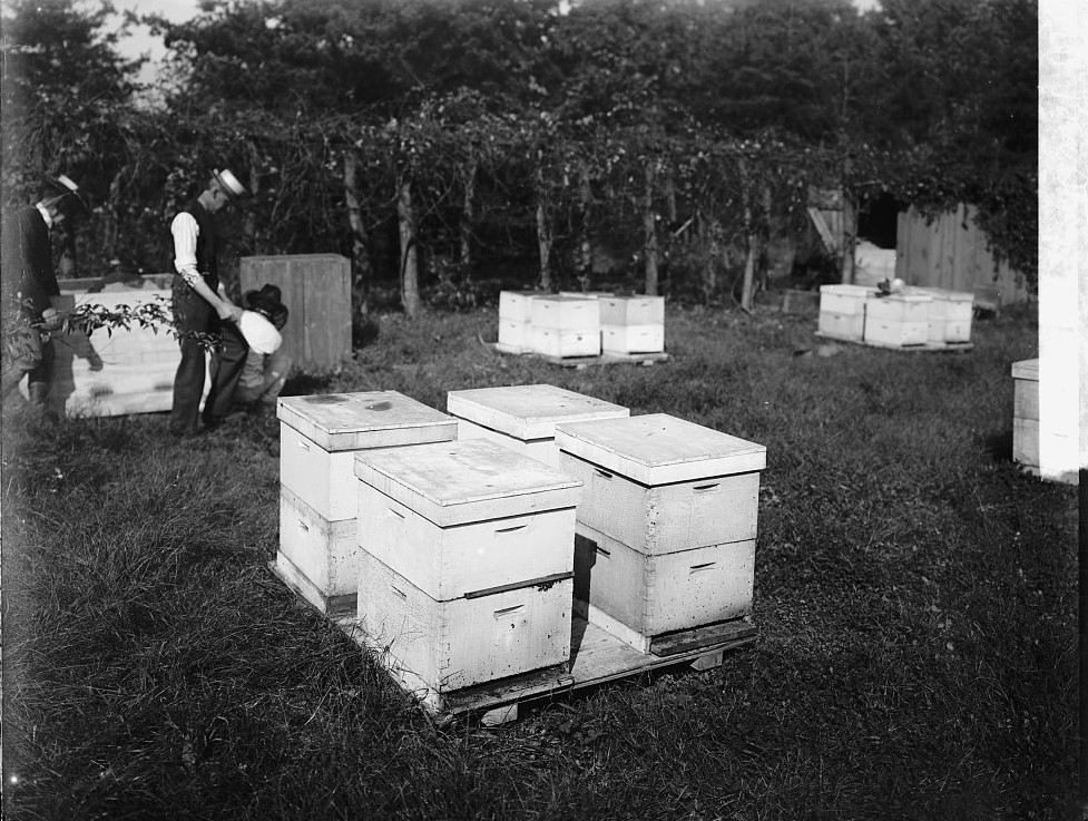 bee hives2
