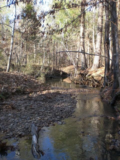 creek wilcox