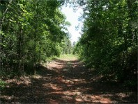 Early roads in Jackson County, Alabama followed Indian Trails