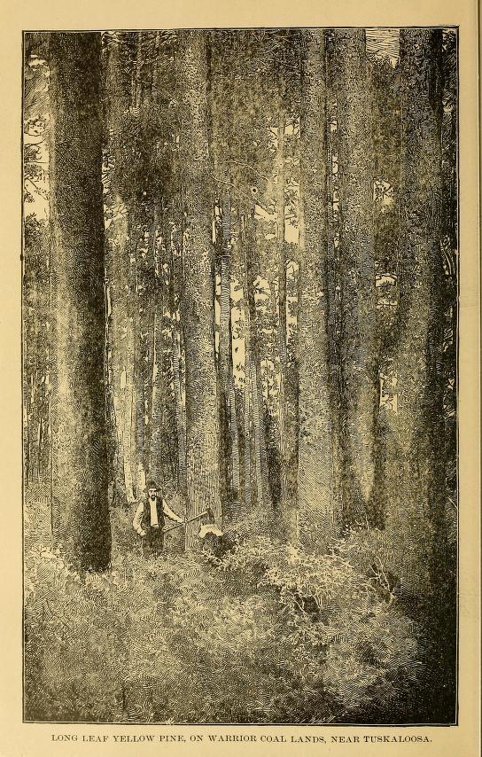 Forest 1887 cityoftuskaloosa00tusc_0018 (1)