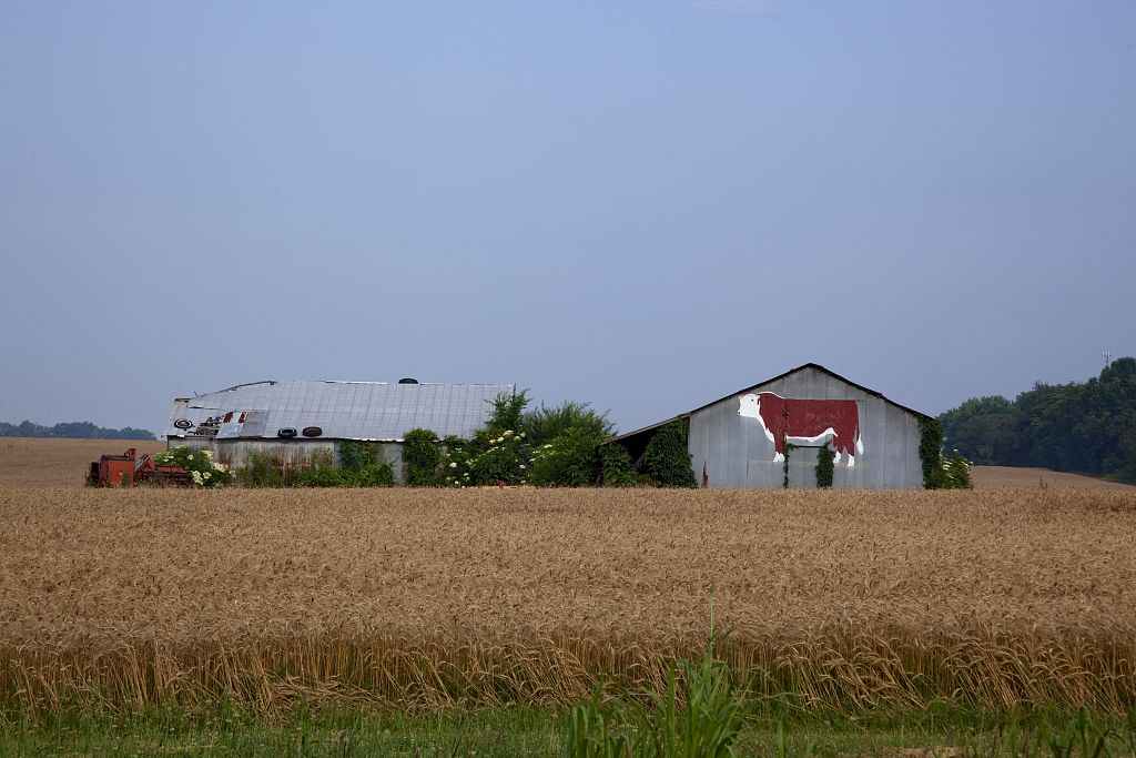 barn with red cow