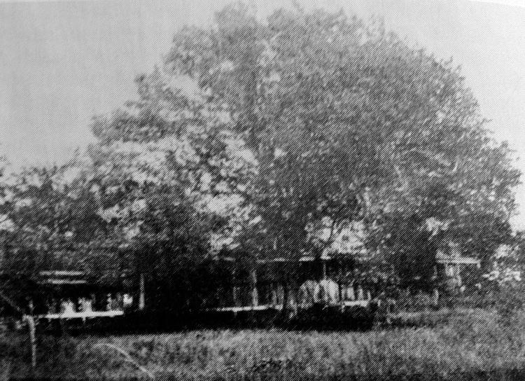 The Surrender Oak