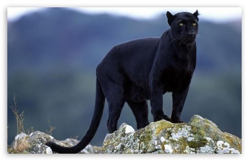 black_panther-t2