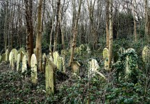 Old Cemeteries are often hidden in the forests – You can help find them