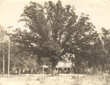 An oak tree in Eufaula, Alabama officially owns itself – here is why