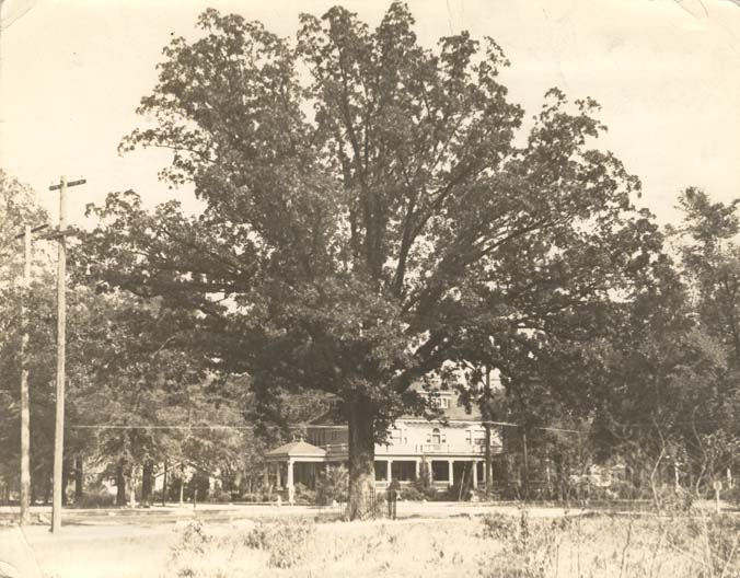 tree that owns itself 1936