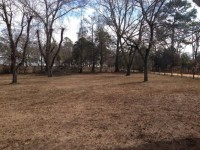 Barbour County – The groves of pecan trees in Glennville are almost as old as the state