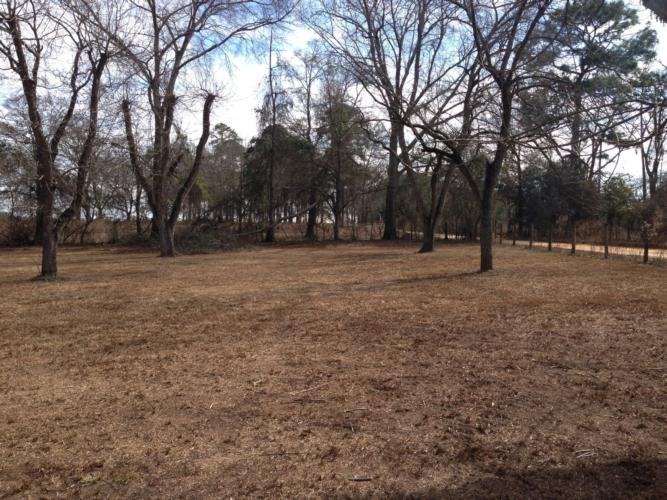 Do you know who started the first pecan grove in Alabama? Here is the answer