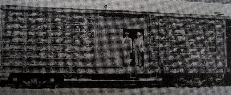 Poultry_Train