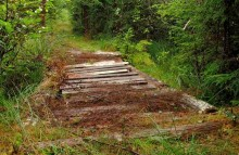 The old corduroy road still runs quietly through the woods of Alabama but is not recognized for what it is