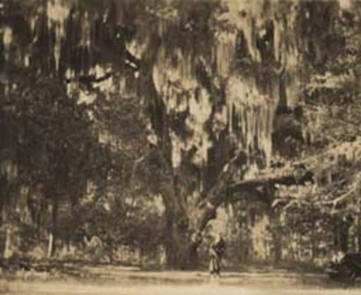 jackson's oak ca. 1930