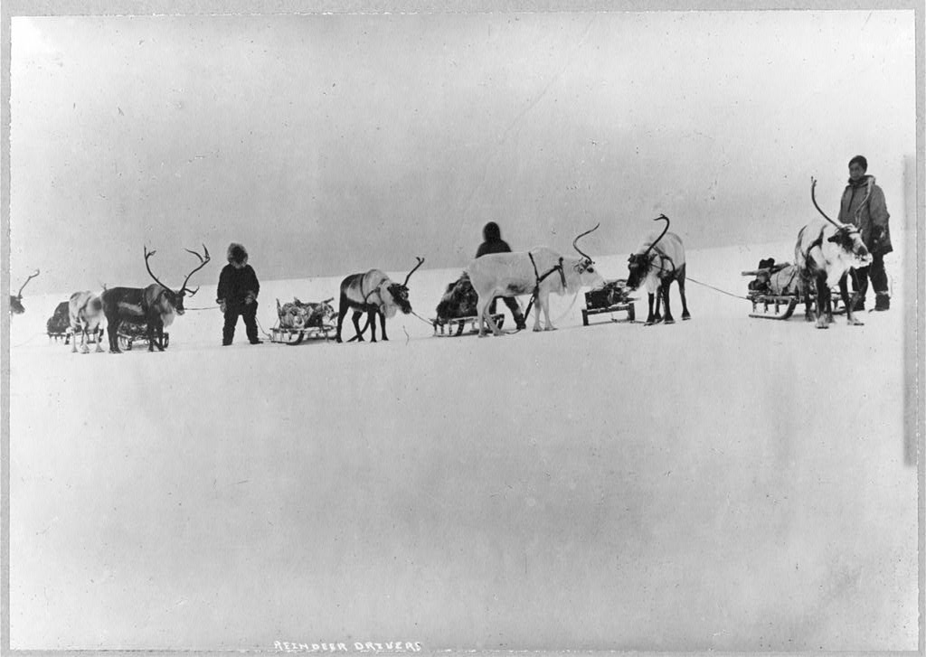 Reindeer, sleds and drivers library of congress ca. 1900