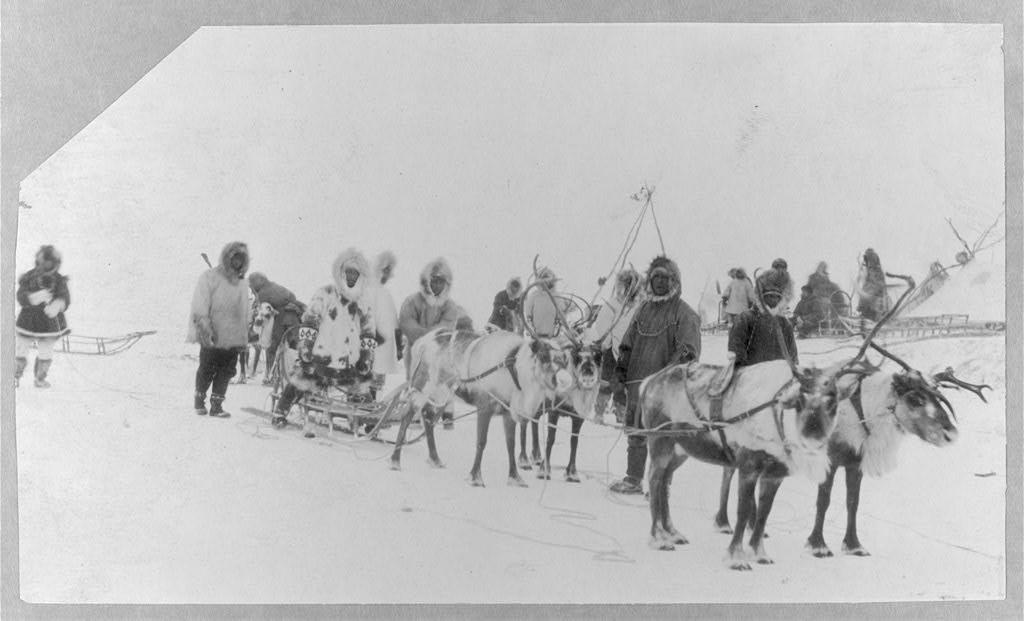 Reindeer team ca. 1900 library of congress