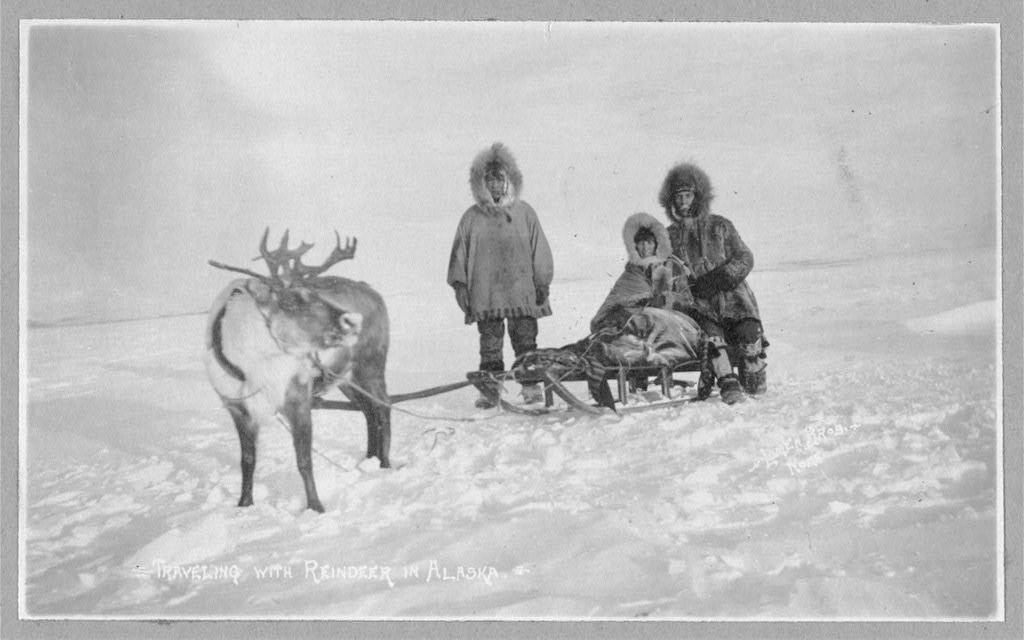 Traveling with reindeer in Alaska ca. 1900 Library of Congress