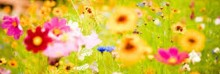 Patron+ Good Ole Days – Flower Tips: Keep flowers fresh for the cemetery – good tips from the past