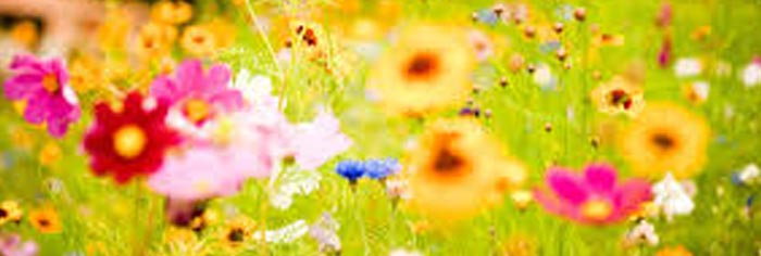 PATRON+ GOOD OLE DAYS- Flower Tips: Keep flowers fresh for the cemetery – good tips from the past