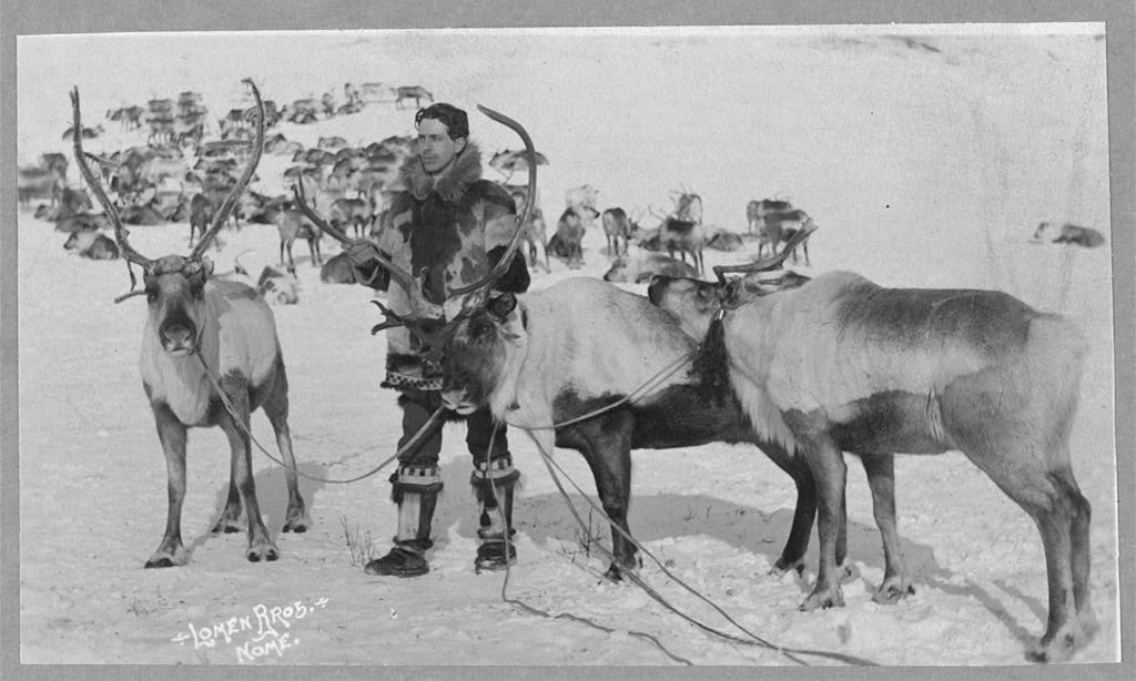 reindeer ca. 1900 library of congress