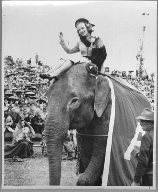 Alabama elephant in parade 1950s