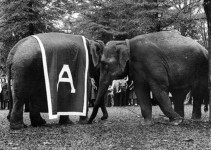 What do you believe is the true source for the University of Alabama elephant mascot known as Big Al?
