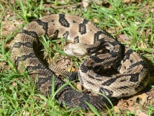 THROWBACK THURSDAY: If you hate snakes – then don't read this
