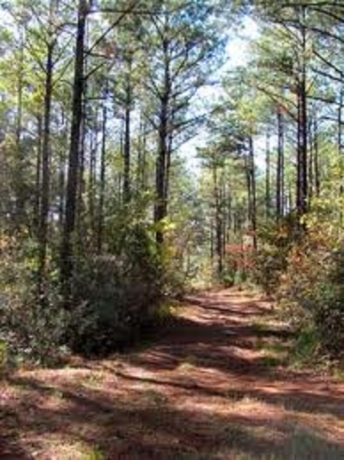 The Federal Road was the state of Alabama's first interstate - Do you know where it was? [map and picture]