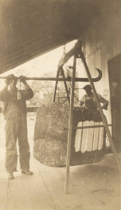 Two_men_weighing_a_bale_of_cotton_at_a_gin_in_Colbert_County_Alabama (Alabama archives Isaac Winston papers 1928)