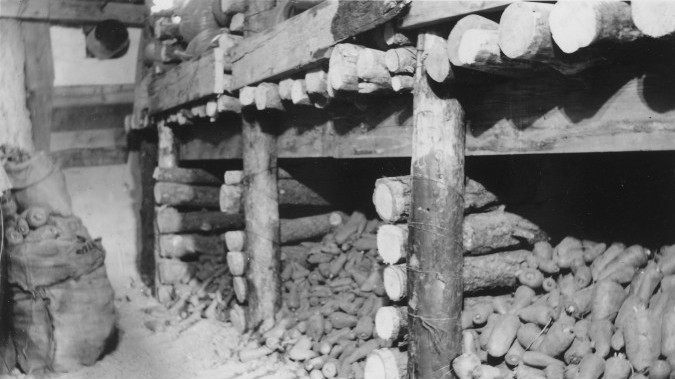 Root cellar with potatoes
