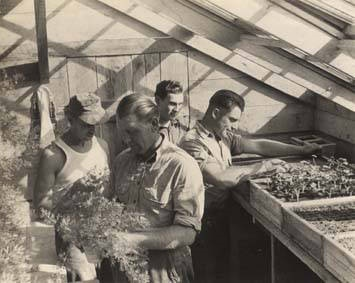 German_prisoners_of_war_working_in_the_greenhouse_at_the_POW_camp_in_Aliceville_Alabama