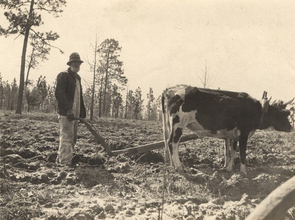 African American man plowing a field in Crawford, Alabama Q5588