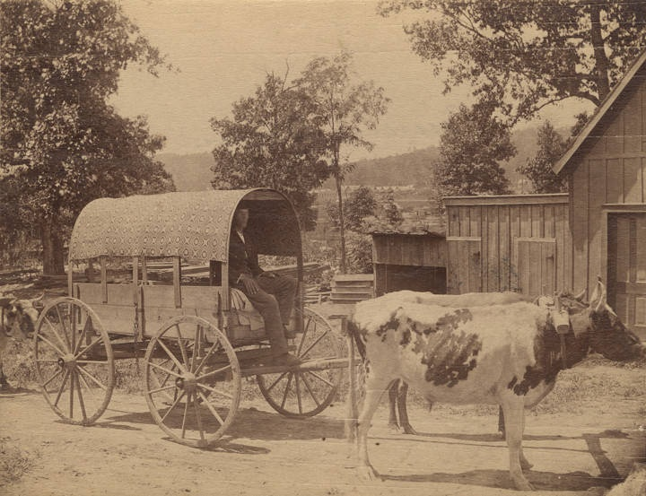 Country tram with carpet cover man with a tram pulled by oxen ca. 1890 in Fort Payne photographer O. W. Chase Q3937