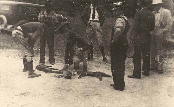 Men looking at foxes caught during a hunt in Barbour County, Alabama. The animal in the center looks like a type of spotted cat rather than a fox. ca. 1930s- 1940s Alabama Writers' Project Q2263