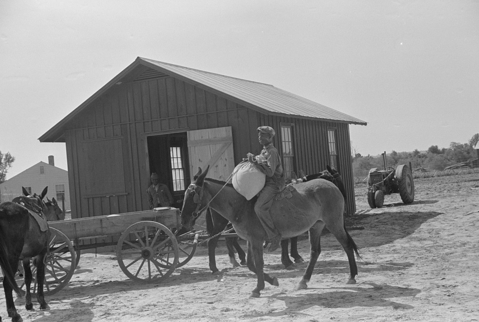 Bringing corn to cooperative mill. Gees Bend, Alabama