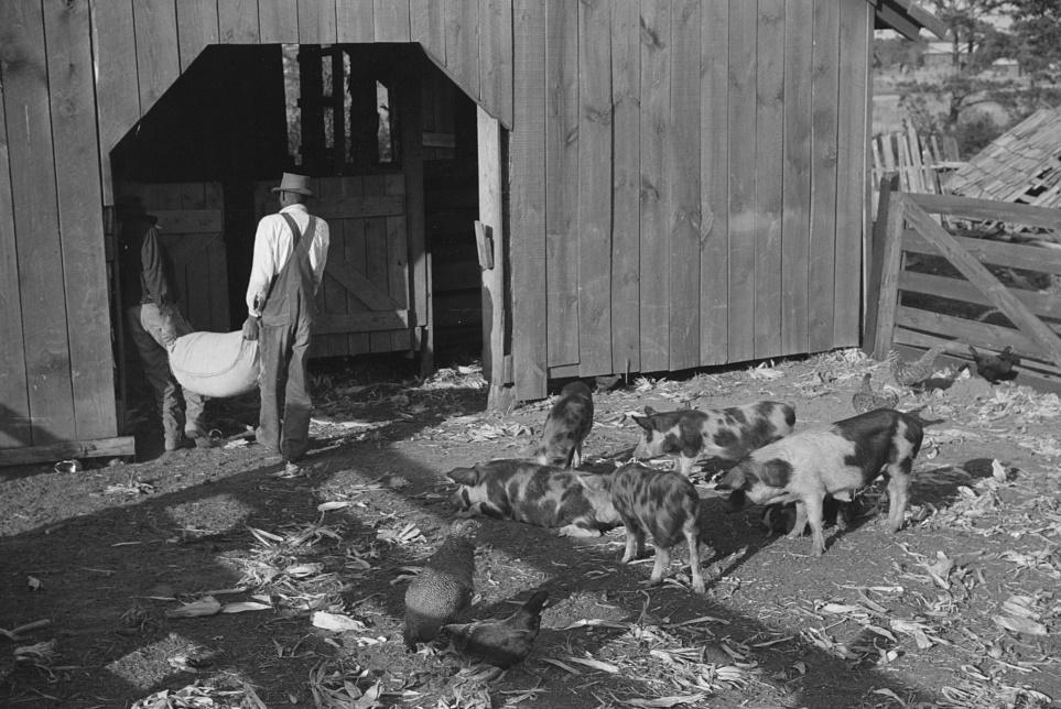 Fertilizer for Nolan Pettway, Gees Bend, Alabama