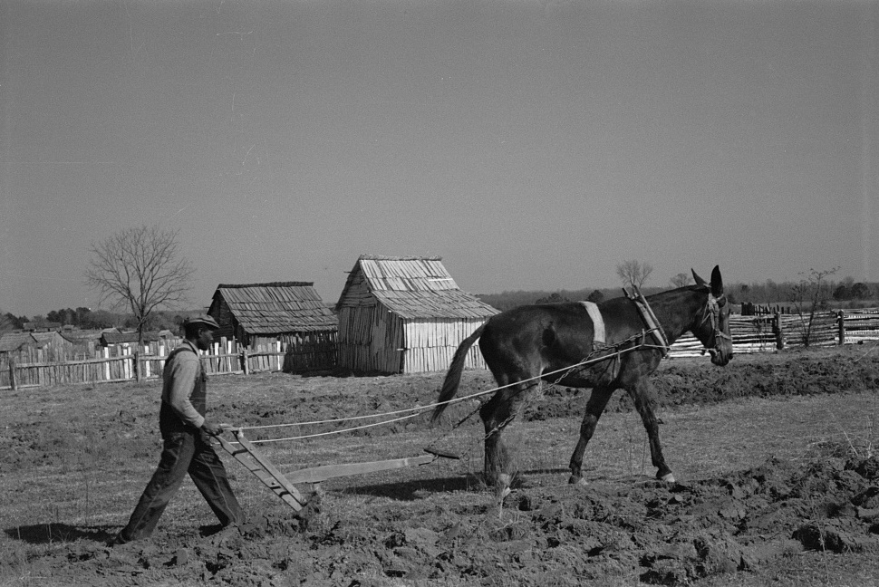 Plowing at Gee's Bend 1937