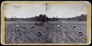 Anne Royall described a cotton plantation in Alabama in 1818
