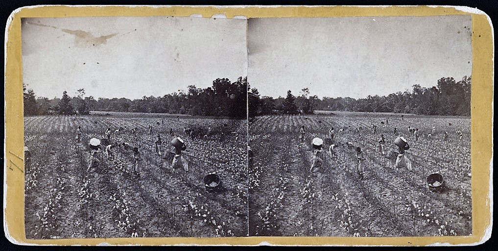 Picking cotton near Montgomery, Alabama 1860 (Library of Congress)