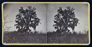 Anne Newport Royall  – Can you believe that in 1818 Spanish moss was used in mattresses for padding?