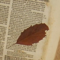 leaf+found+in+the+ancient+Bible