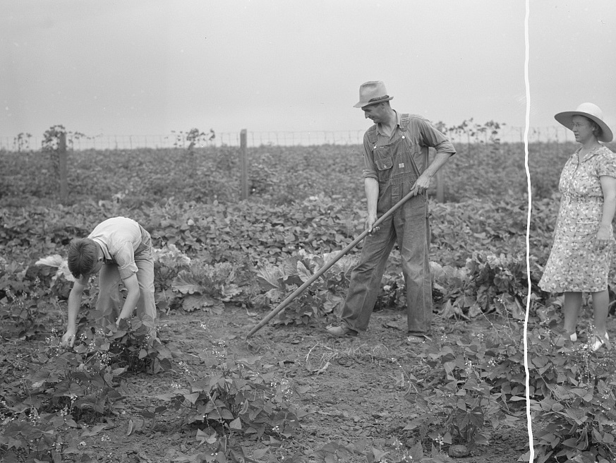 mr-clark-and-son-doing-some-weeding-in-coffee-county-1939-by-john-collier-library-of-congress