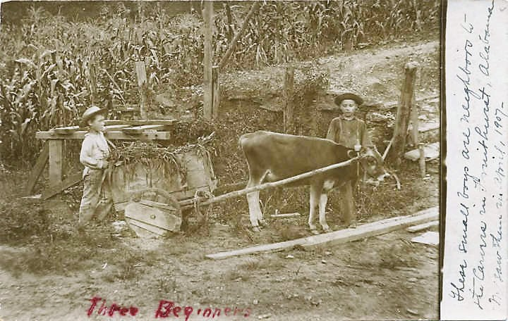 three-young-boys-working-in-a-corn-field-in-fruithurst-alabama-ca-1907-alabama-department-of-archives-and-history