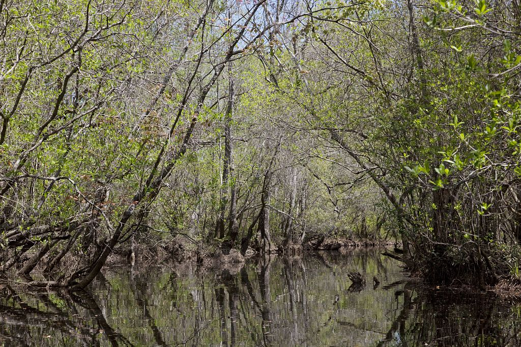 PATRON + The mystery of Hal's Lake – Clarke County, Alabama – how it got its name
