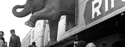 Train crashed and circus animals escaped in Escambia, County, Alabama
