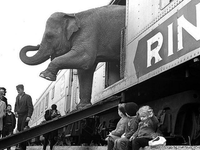 PATRON + Train crashed and circus animals escaped in Escambia, County, Alabama