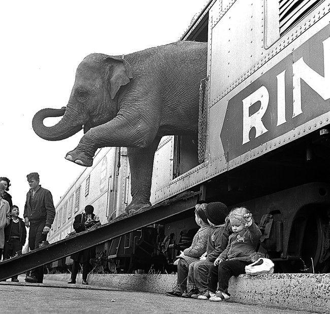 PATRON + Train crashed and circus animals escaped in Escambia, County, Alabama